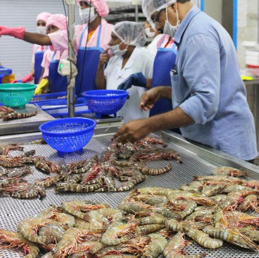 Seafood exporters in kerala, Seafood Cochin, seafood